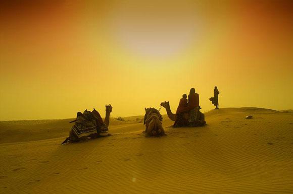 camello aguja