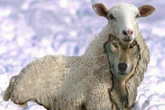 lobo disfrazado de oveja